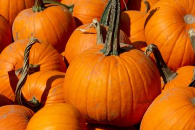 Pumpkin Tips